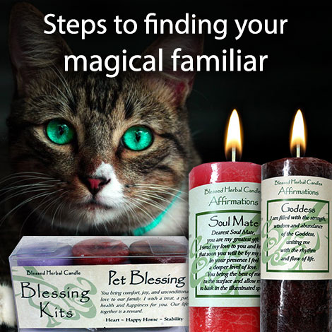 Steps to finding your magical familiar