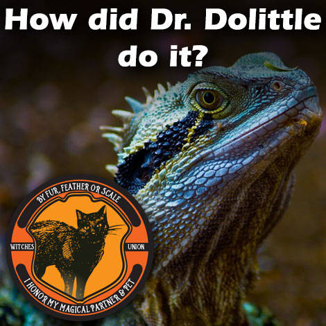 How did Dr. Dolittle do it?